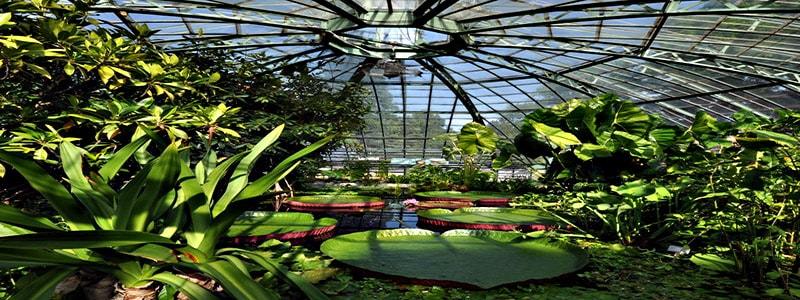 Jardín Botánico de la Universidad de Basilea