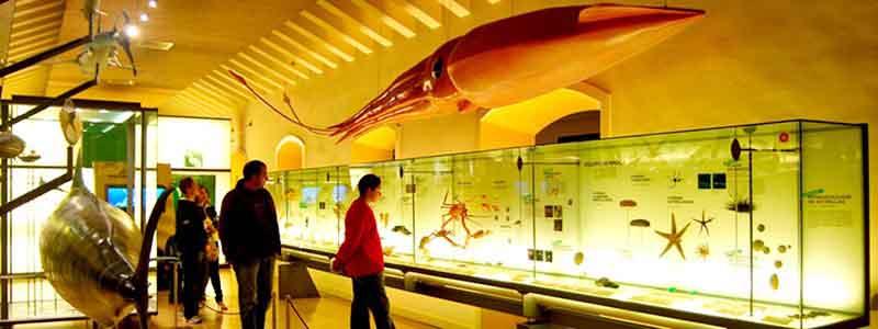 Museo de la Naturaleza y el Hombre de Santa Cruz de Tenerife