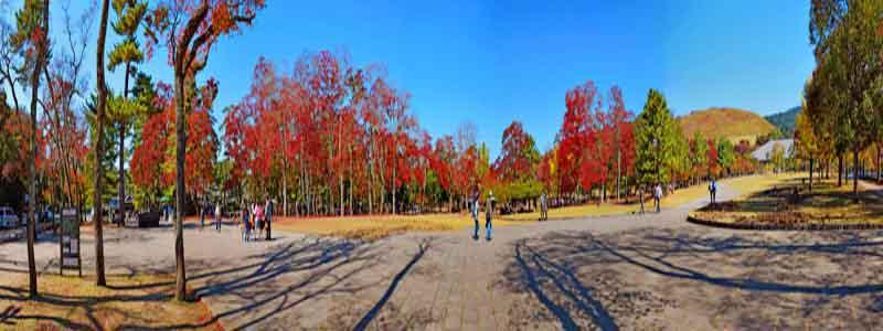Foto de Nara - Sitios que visitar en Nara de turismo - Ilutravel.com