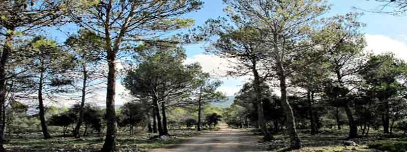 Peña del Aguila de MAncha Real