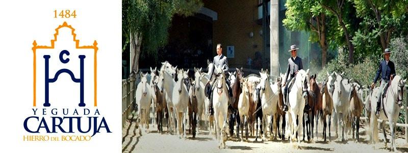 Yeguada La Cartuja - Hierro del Bocado de Jerez de la Frontera