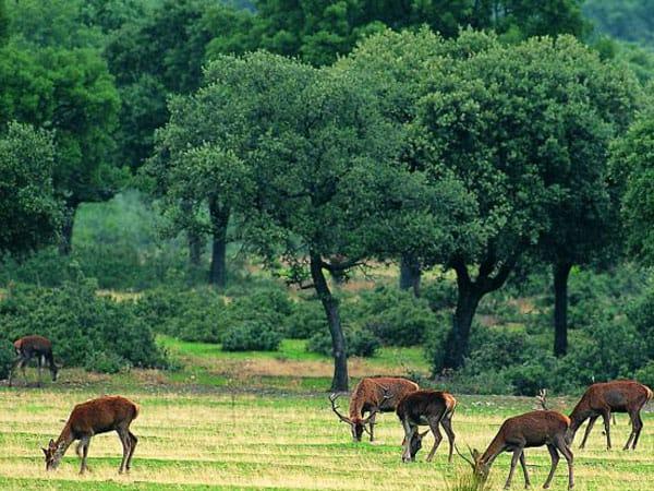 Parque Natural de Cabañeros Toledo - Ilutravel.com