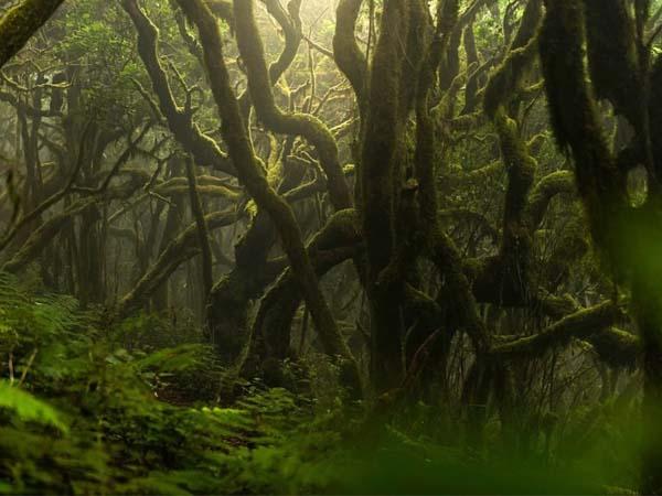 Parque Nacional de Garajonay de La Gomera