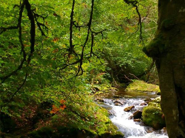 Bosque de Muniellos de Cangas del NArcea