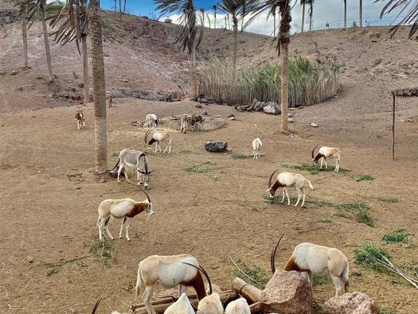 Vista con animales en el Oasis Wildlife de Fuerteventura
