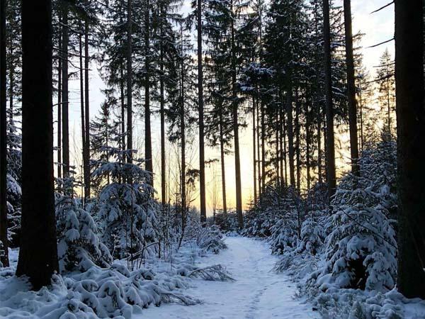Interior de la Selva Negra de Alemania