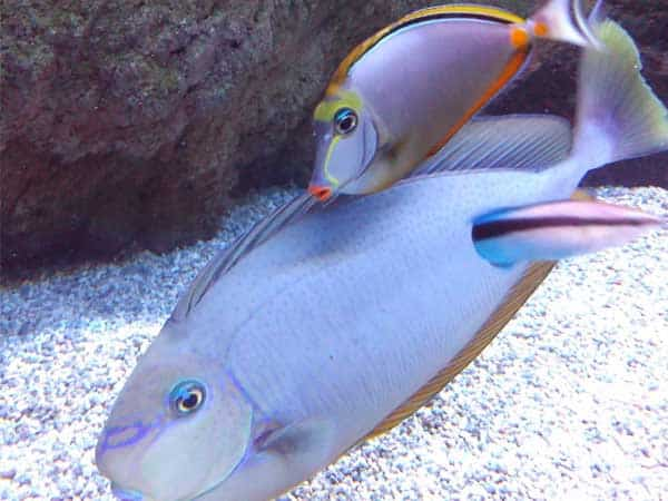 Aquarium Costa Teguise Lanzarote - Sitios de interés turístico de Lanzarote - Ilutravel.com