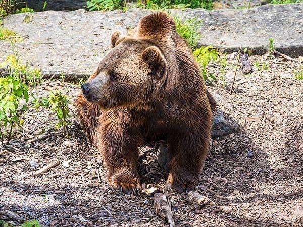 Bear Pit Berna - Lugares de interés de Berna - Ilutravel.com