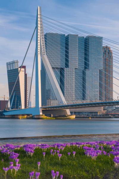 Erasmusbrug de Rotterdam - Visitar en un día Rotterdam de viaje - Ilutravel.com
