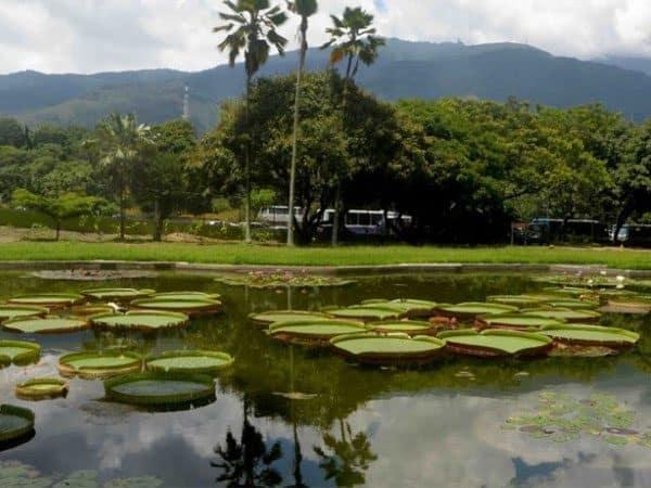 Jardin Botanico Caracas lugar que ver