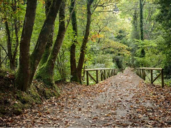 Senda del Oso - Que ver en Asturias para 5 días - Ilutravel.com