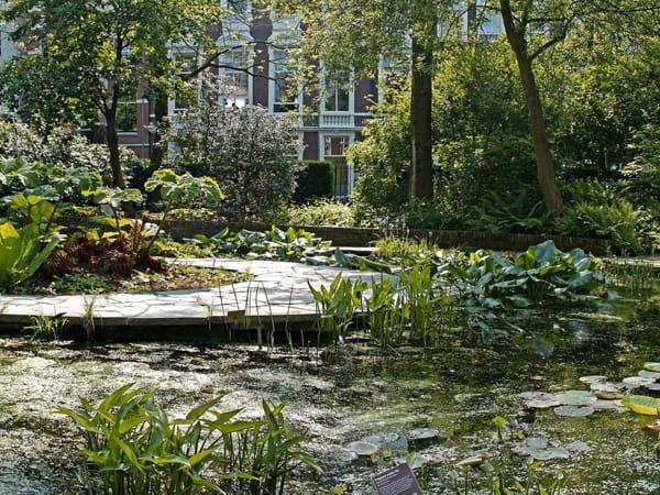 hortus botanicus amsterdam - Ver Ámsterdam haciendo turismo viaje - Ilutravel.com